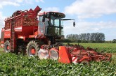 Holmer: DynaCut scalper for Terra Dos T3 harvesters