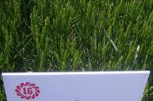 Limagrain: New milling opportunities unveiled at Cereals 2011