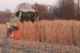 Terravesta: Autumn farm walks planned to showcase miscanthus