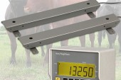 Avery Weigh-Tronix: Adapt your cattle crush for safe weighing