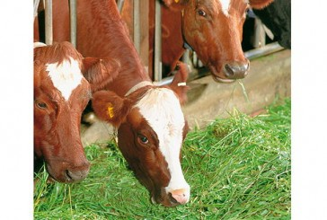 Perstorp: UK launch for new-generation forage additives