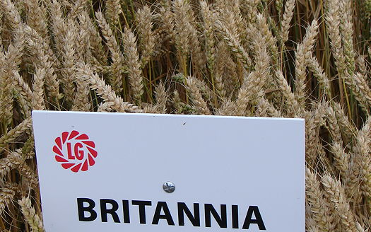 Limagrain: New Group 3s offer high yields and more market options