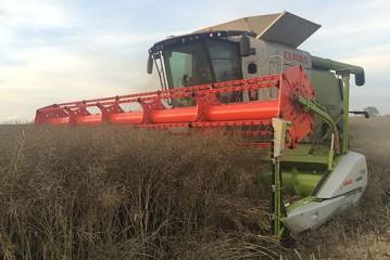 Agrovista: Record-beating oilseed rape crop yields 7.2t/ha