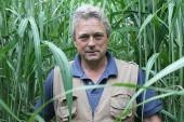 Terravesta: Norfolk farmer to showcase miscanthus crop