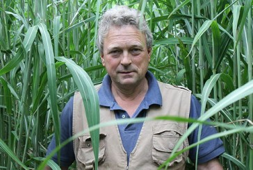 Terravesta: Norfolk farmer to showcase miscanthus crop