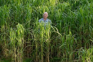 Terravesta: Record yield for miscanthus crop