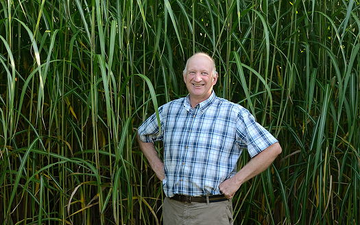 Terravesta: Farm walk will showcase record-breaking miscanthus crop