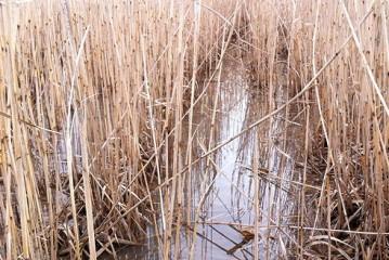 Terravesta: Energy crop in trials to restore flood plain soils