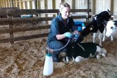 Dairy Spares: Colostrum-feeding kit is kinder to calves