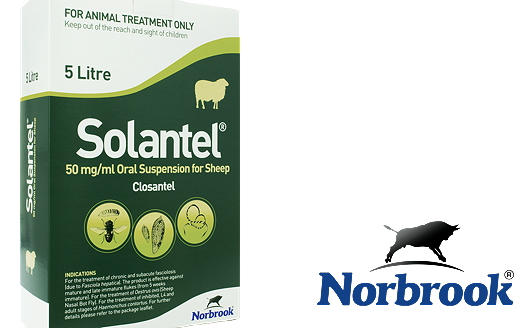 Norbrook: New flukicide for sheep and lambs launched