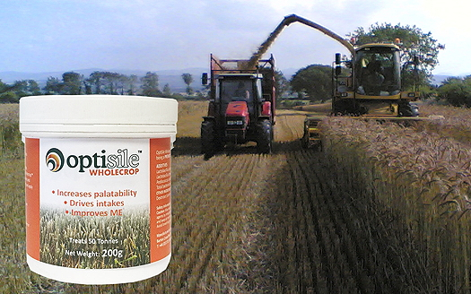 Envirosystems: Wholecrop inoculant offers rapid preservation and open-clamp stability