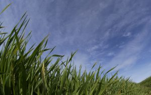Syngenta: New era for barley disease control as fungicide launch is extended