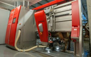Lely: Astronaut A5 marks a new milestone in robotic milking