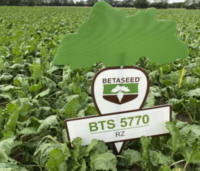 New variety BTS 5570 offers an exceptional disease resistance package, combined with a very high sugar content of 17.6%