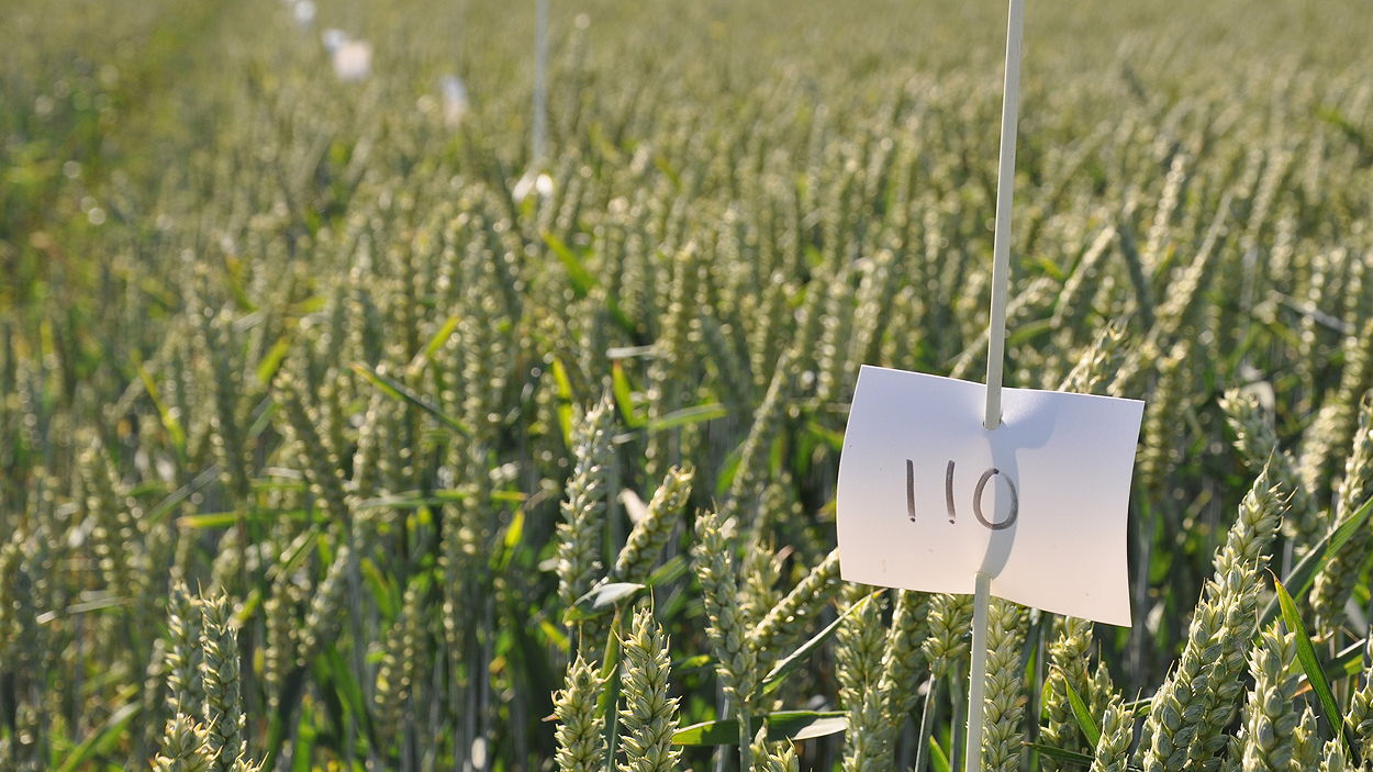 Procam's research trials are used to equip its UK-wide agronomist team with the latest technical knowledge to help them when advising farmers